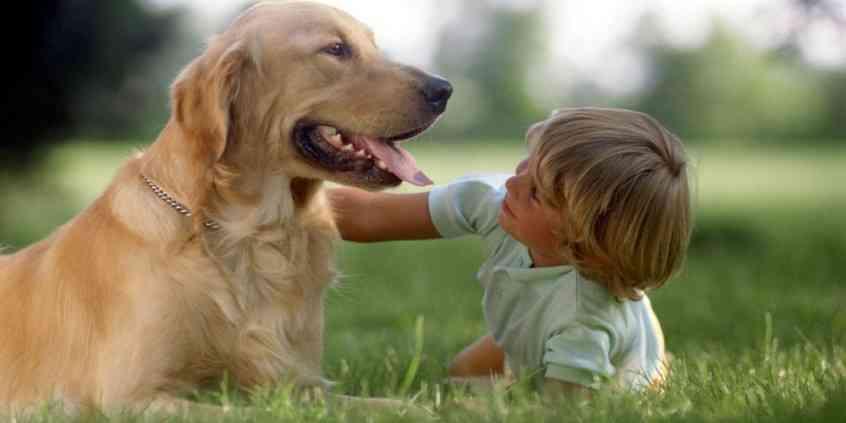 Co to jest alergia na sierść zwierząt?